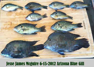 arizona-blue-gill-thumb.jpg
