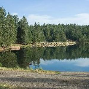 Riggs flat lake hookedaz arizona fishing community for Az game and fish phone number