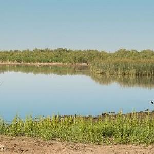 Selma 50 >> Picacho Reservoir | HookedAZ - Arizona Fishing Community