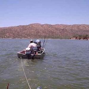 Bartlett lake hookedaz arizona fishing community for Bartlett lake fishing report
