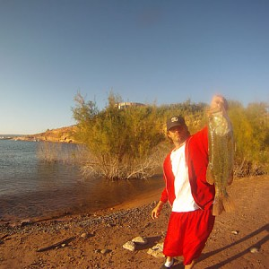Arizona fishing report hookedaz arizona fishing community for Bartlett lake fishing report