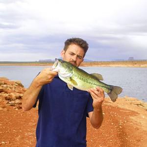Largemouth bass near glen canyon dam lake powell for Bass fishing lakes near me